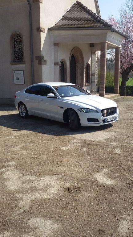 VTC Colmar: Jaguar